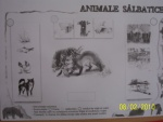 animale salbatice 012